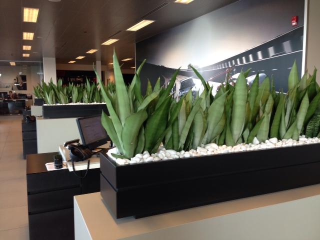 greenery on an office desk